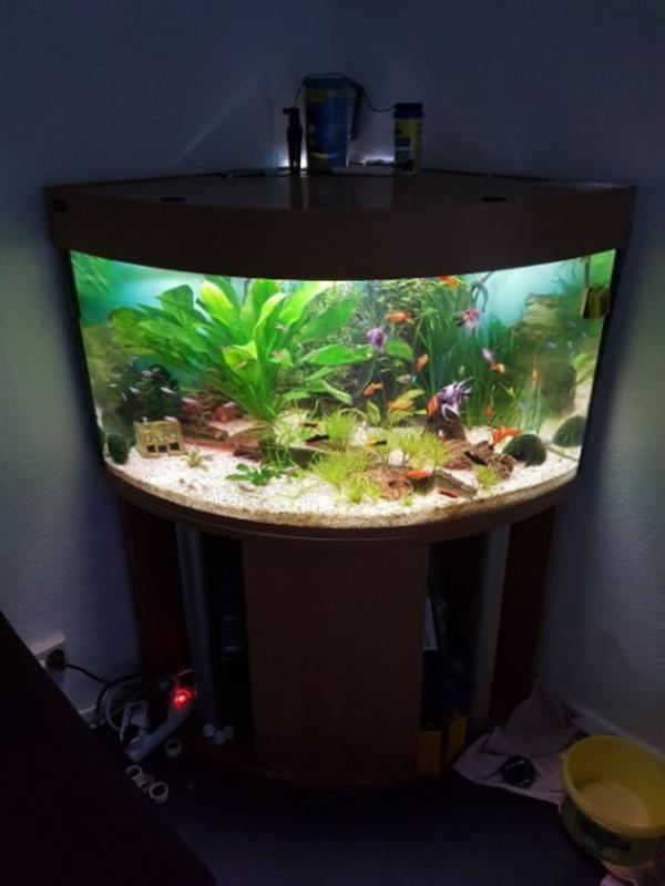 aquaristik in braunschweig bei deinetierwelt. Black Bedroom Furniture Sets. Home Design Ideas