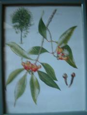 gerahmte alte botanische Blumenbilder