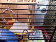 Hamster/Mäusekäfig