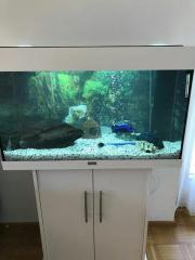Juwel Aquarium 125