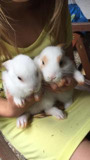 Kaninchen /Hasen Babys