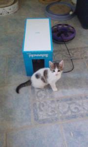 Katze, ca. 10