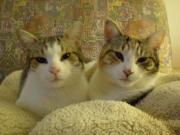 Katzen Mami & Triku