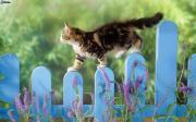 Katzenbetreuung KITTY Catsitting