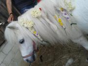 Kindergeburtstag mit Pony