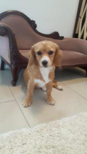 Kleine Hundin