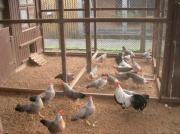 Kleintierzuchtverein bietet in