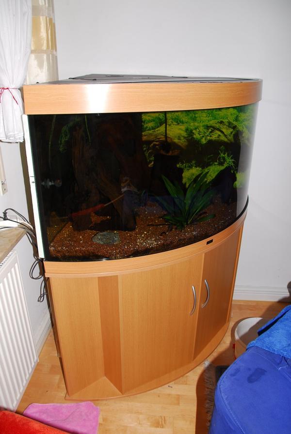 diskus verkaufen kleinanzeigen aquaristik kaufen verkaufen bei deinetierwelt. Black Bedroom Furniture Sets. Home Design Ideas