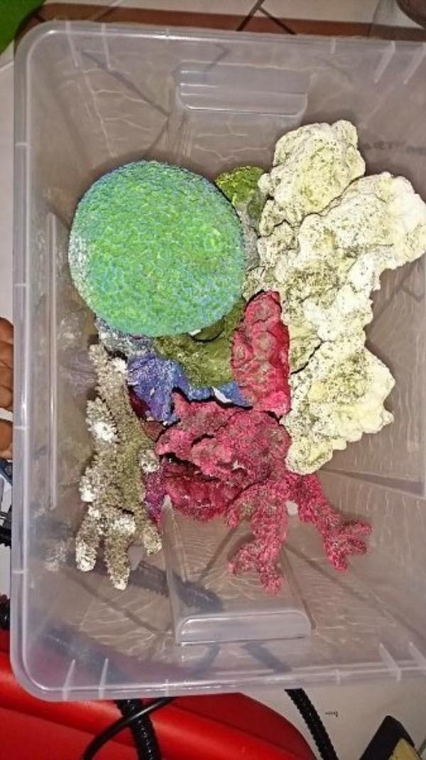 lochgestein kleinanzeigen aquaristik kaufen verkaufen bei deinetierwelt. Black Bedroom Furniture Sets. Home Design Ideas