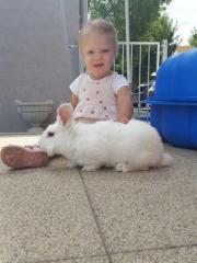 lang haar kaninchen