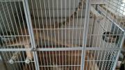 Nager-/Vogelkäfig