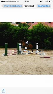 Reiterin sucht Pferd