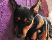 Sid, 2 Jahre,