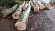 Stammholz Eichenstämme Baumstämme