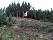 Suche Wald im