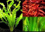 Suche Wasserpflanzen
