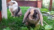 Urlaubsbetreuung für Kaninchen