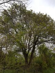 Verschenke Baum(Bäume)