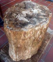 Versteinertes Holz versteinerter