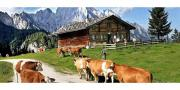 Vorarlberger Familie sucht