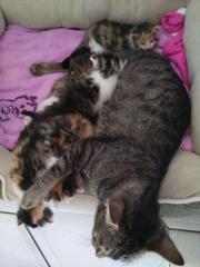 Wunderschöne Mai Kätzchen
