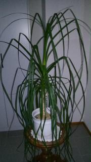 zimmerpflanzen in frankfurt pflanzen garten g nstige. Black Bedroom Furniture Sets. Home Design Ideas