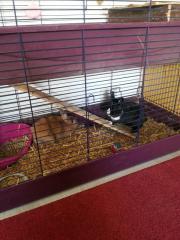 zwei Kaninchen mit